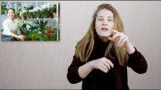 Kwiaty i rośliny doniczkowe pozytywnie wpływają na zdrowie
