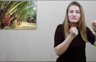 Rafinowany olej palmowy – co to jest?