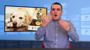 Pies – co nie wolno jeść?