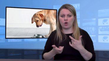 Czy pies może jeść kaszę?