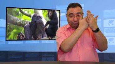 Chronią małpy przed torturami