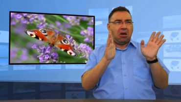 Czy potrzebne są nam owady?