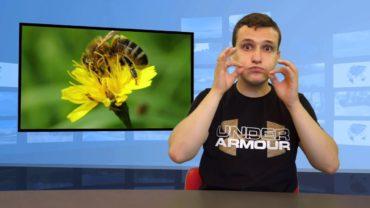 Roboty zastąpią pszczoły?