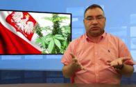 Czy w Polsce marihuana będzie legalna?