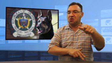 Pies przez narkotyki pod ochroną