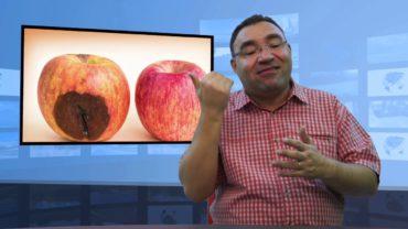 Wykrojenie zepsutego jabłka – czy można jeść?