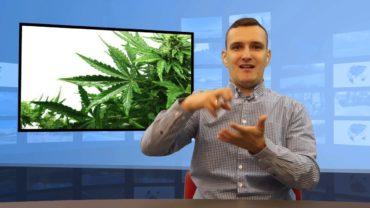 Kanada – marihuana legalna