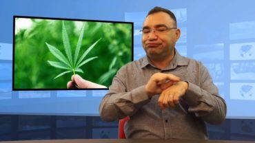 Od 1 listopada medyczna marihuana w Wielkiej Brytanii