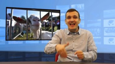 Koza zjadła pieniądze 20 tys euro