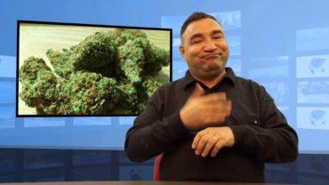 Medyczna marihuana – gdzie kupić?