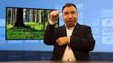 Nowa Zelandia posadzi miliard drzew