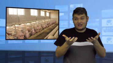 Litwa sprawdzi wieprzowinę z Polski