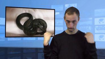 Znalazł węża w ogrodzie