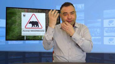 Niedźwiedź zaatakował w lesie