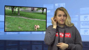 Trzy psy zaatakowały dziewczynkę