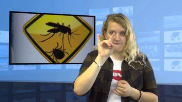 Inwazja komarów