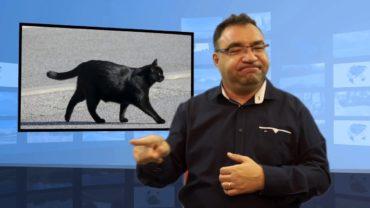 Kupował koty na przynętę