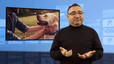 Po zawale i udarze pies daje większe szanse na przeżycie?