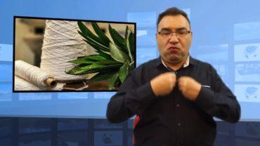 Z liści ananasa można uszyć ubrania?