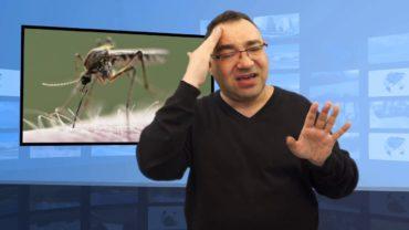 Czy komary przenoszą koronawirusa?