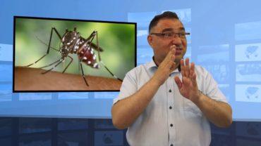 Komar tygrysi coraz bliżej Polski
