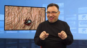 Komary, kleszcze, muchy – czy przenoszą koronawirusa?