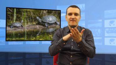 Bieszczady – odkryto żółwia błotnego
