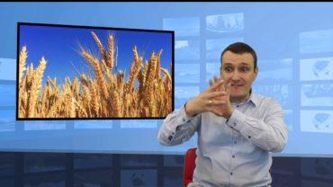 Polska dużo eksport pszenicy do Europy