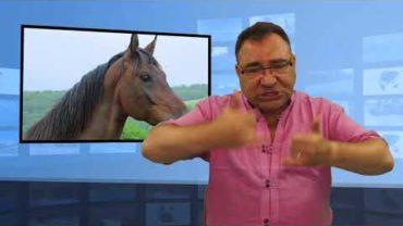Postrzelono konia za 440 tys.