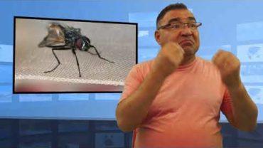 Próbował zabić muchę i wybuchł gaz