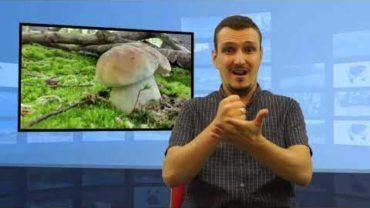 Zbierasz grzyby – możesz dostać mandat – dlaczego?